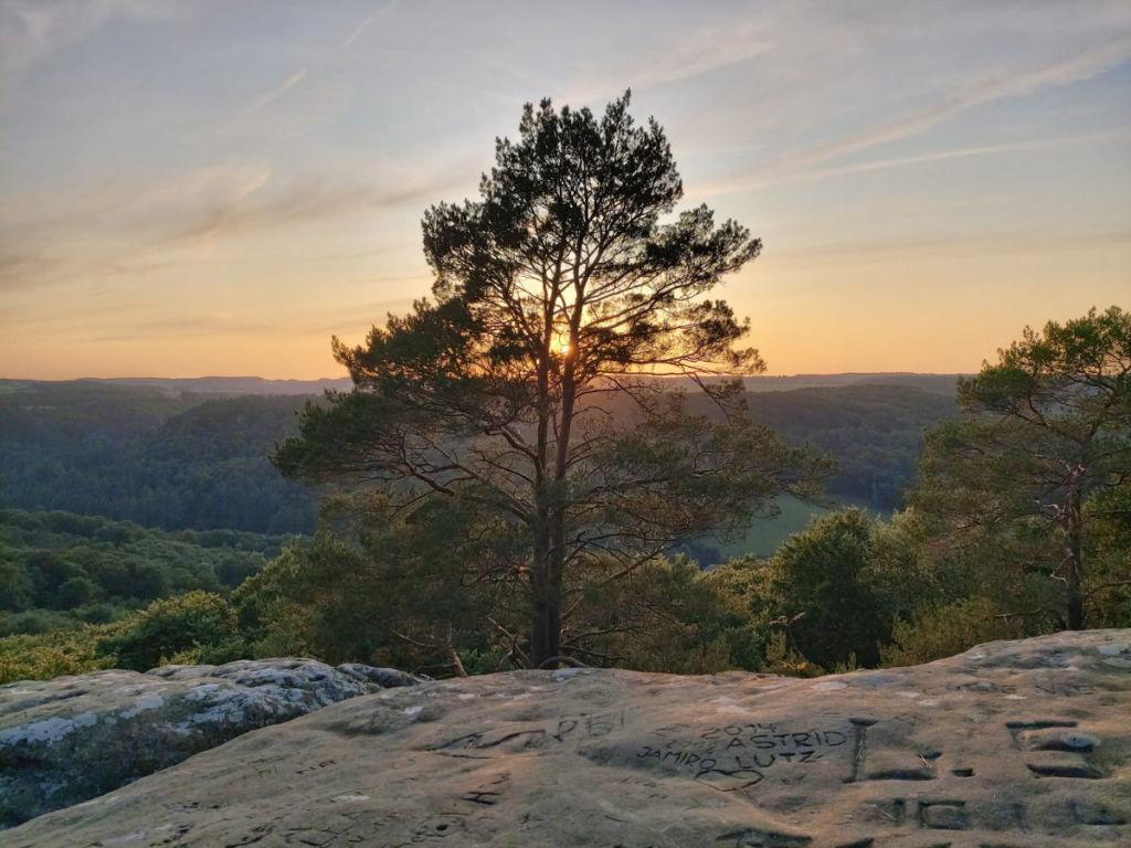 Online Life Coaching-Blick vom Felsen, die untergehende Sonne schimmert durch einen Baum